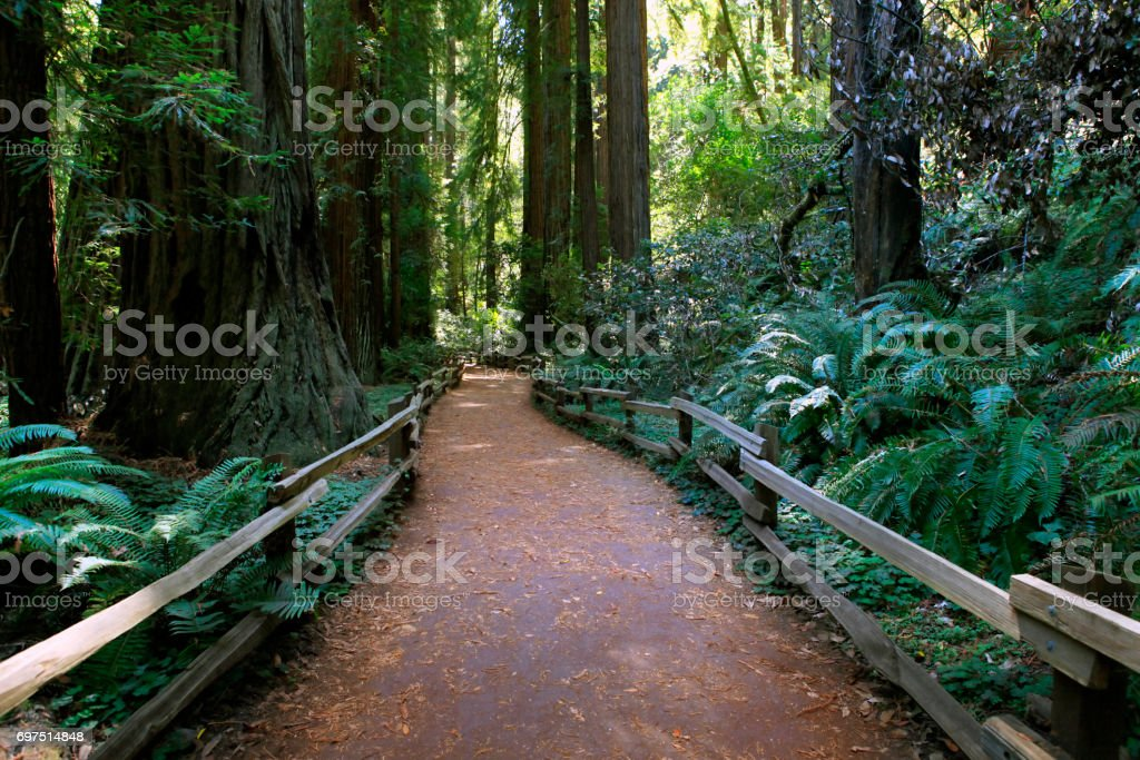 Hiking path through the redwood forest in Muir Woods National Monument stock photo