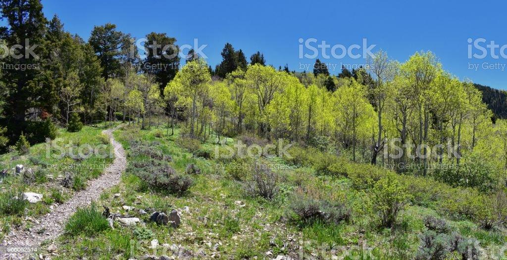 Wandern Weg auf die Oquirrh Berge entlang der Wasatch Front Rocky Mountains, von Kennecott Rio Tinto Copper mine, Tooele und der Great Salt Lake Valley im Frühjahr. Utah, USA. - Lizenzfrei Alpine - Utah Stock-Foto