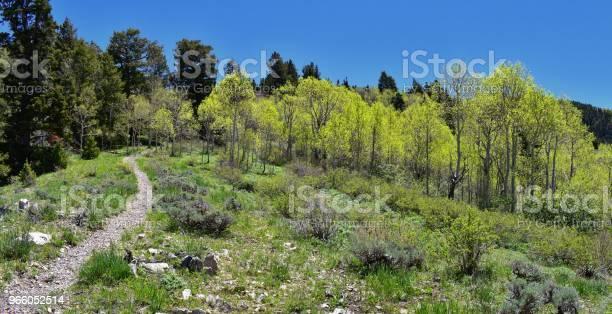 Wandern Weg Auf Die Oquirrh Berge Entlang Der Wasatch Front Rocky Mountains Von Kennecott Rio Tinto Copper Mine Tooele Und Der Great Salt Lake Valley Im Frühjahr Utah Usa Stockfoto und mehr Bilder von Alpine - Utah