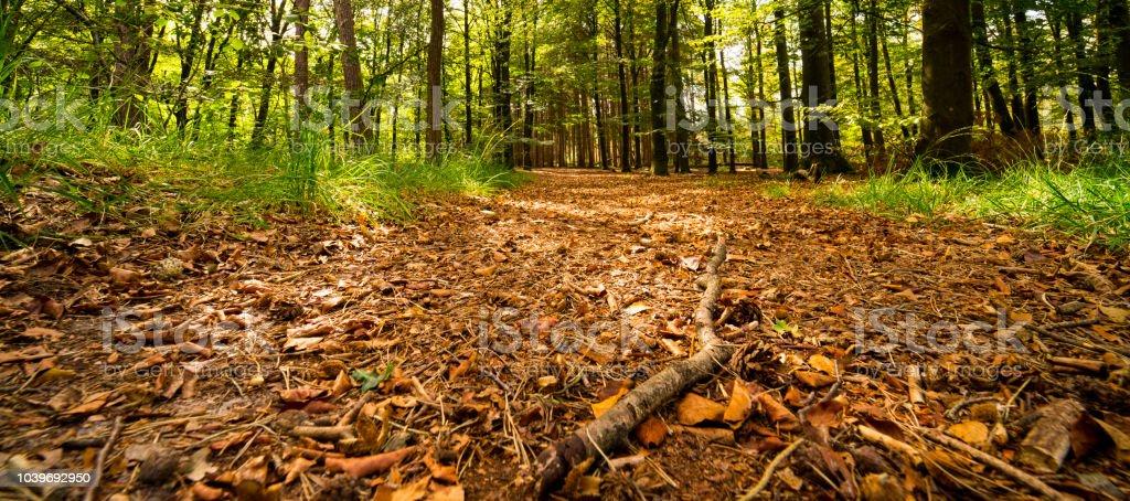 wandelpad met bruine bladeren in nationaal park Oisterwijkse Vennen, Nederland, banner foto