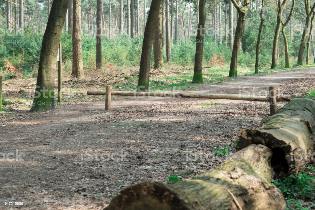 hiking path with trees,  reserve De Malpie in Valkenswaard, The Netherlands stock photo