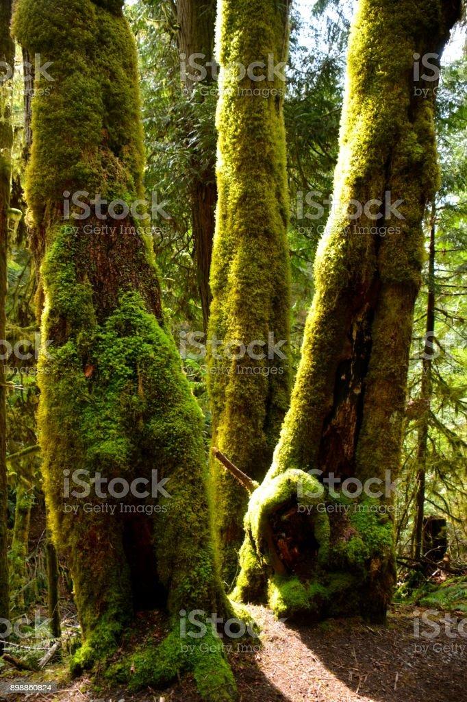 Hiking Plants stock photo
