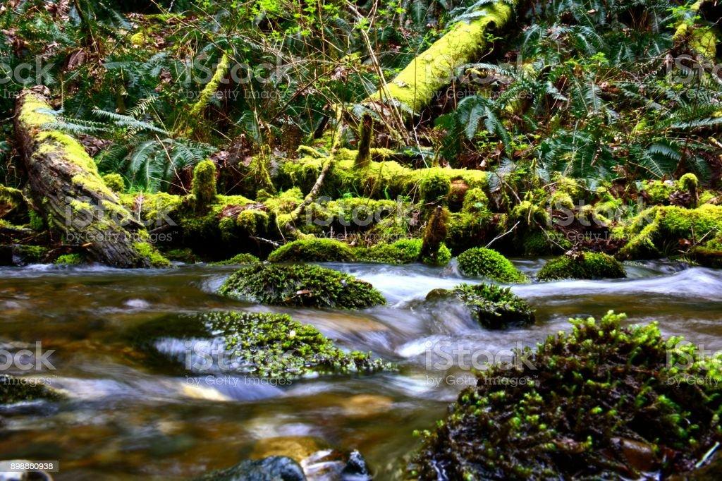 Hiking Plants royalty-free stock photo