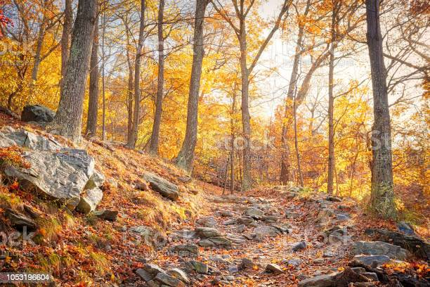 Photo of Hiking rocky trail through colorful orange foliage fall autumn forest with many leaves, rocks, stones on path in Harper's Ferry, West Virginia, sun behind sunburst trees, fallen leaf