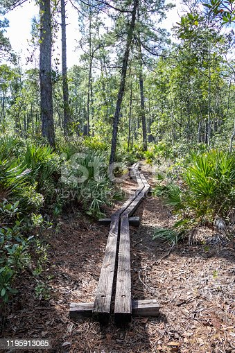 Hiking the Beautiful Trails of Florida State Parks