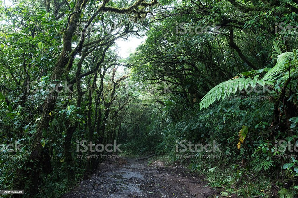 Hiking the cloud forest of Monteverde Costa Rica stock photo