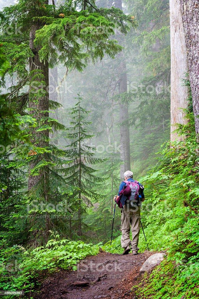 Hiking the Heliotrope Ridge Trail stock photo