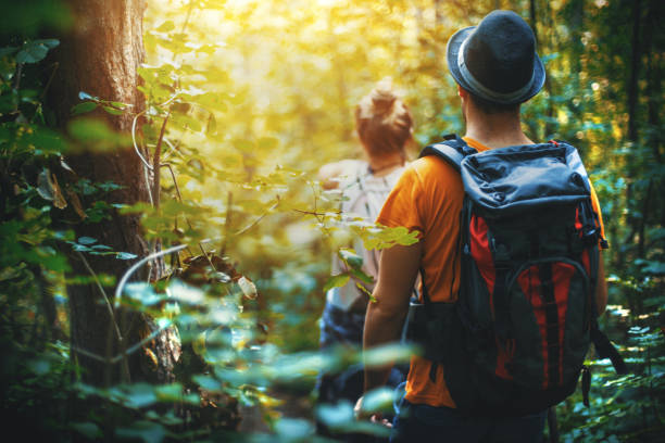 hiking through a forest. - wildlife travel stock pictures, royalty-free photos & images