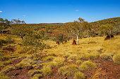 hiking to hancock gorge in the desert of karijini national park, western australia