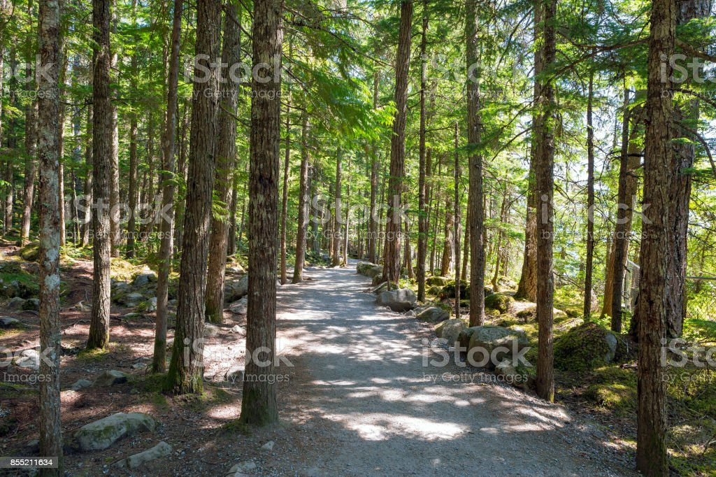 Hiking Trail at Brandywine Falls Provincial Park BC stock photo