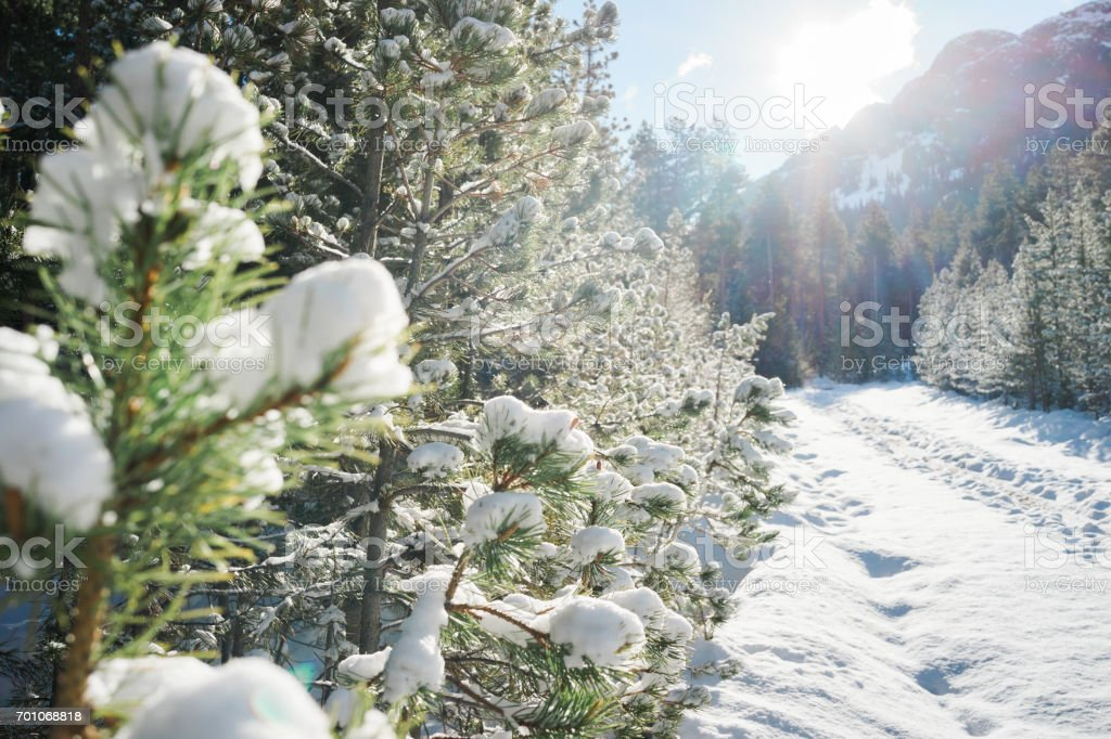 Hiking trail covered in snow with trees stock photo
