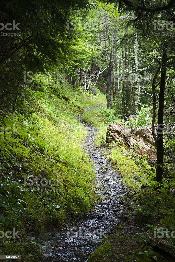 hiking trail in the Great Smoky Mountains National Park royalty-free stock photo