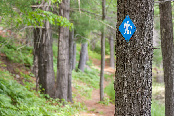 hiking trail in frontenac park - provincial park stock photos and pictures