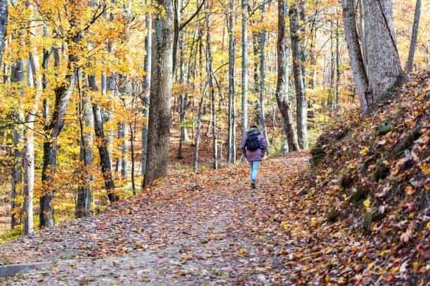 Hiking trail in Harper's Ferry with hiker, young woman in cold coat walking through colorful orange yellow foliage fall autumn forest with many fallen leaves on path in West Virginia Hiking trail in Harper's Ferry with hiker, young woman in cold coat walking through colorful orange yellow foliage fall autumn forest with many fallen leaves on path in West Virginia appalachian trail stock pictures, royalty-free photos & images