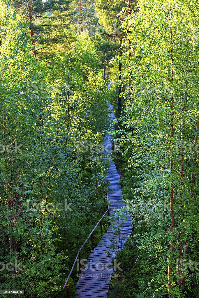 hiking trail in late spring royalty-free stock photo