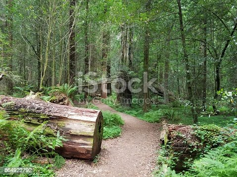 istock Hiking trail in Redood National Park 864922792