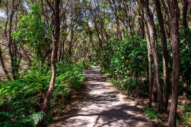 Hiking Trail in Rotorua stock photo