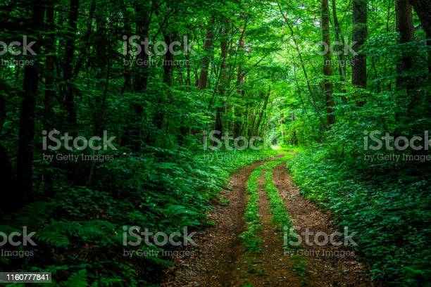 Photo of Hiking trail in the forest