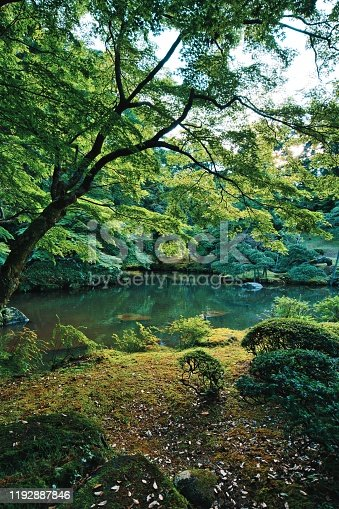 Japan Nature, Forest, Alternative Therapy, Backgrounds, Beauty