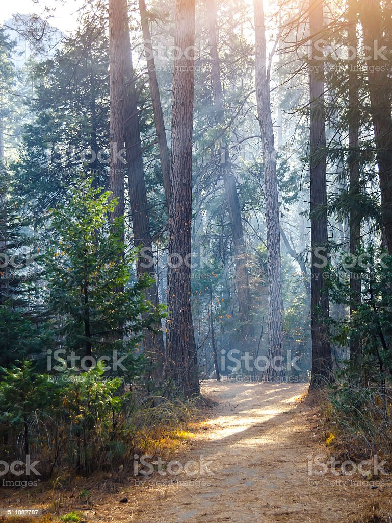 hiking trail in the forest stock photo