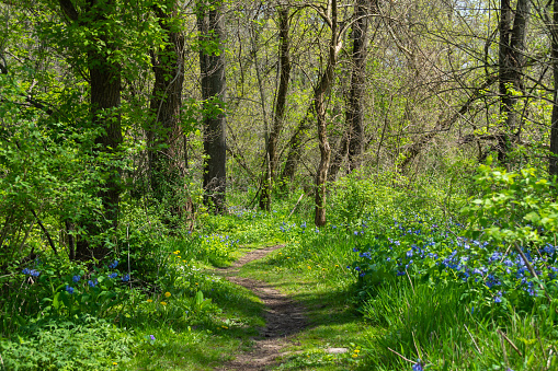 Hiking trail through the woodlands on a beautiful Spring morning.  Franklin Creek State Natural Area, Franklin Grove, Illinois