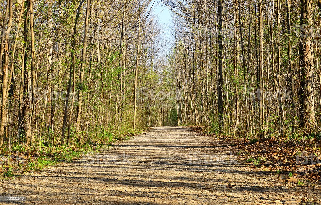 Hiking trail in woods stock photo