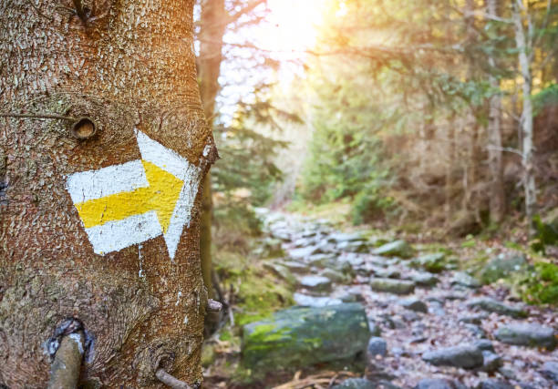 Hiking trail marker on a tree in mountain forest. stock photo
