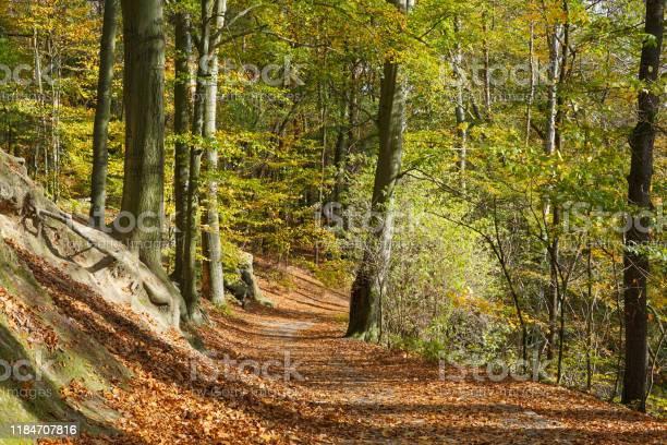 Photo of A hiking trail near Königstein in the Saxon Switzerland