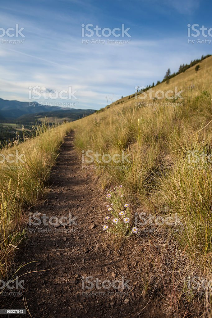 Hiking Trail on a Grassy Hillside with Blue Sky stock photo