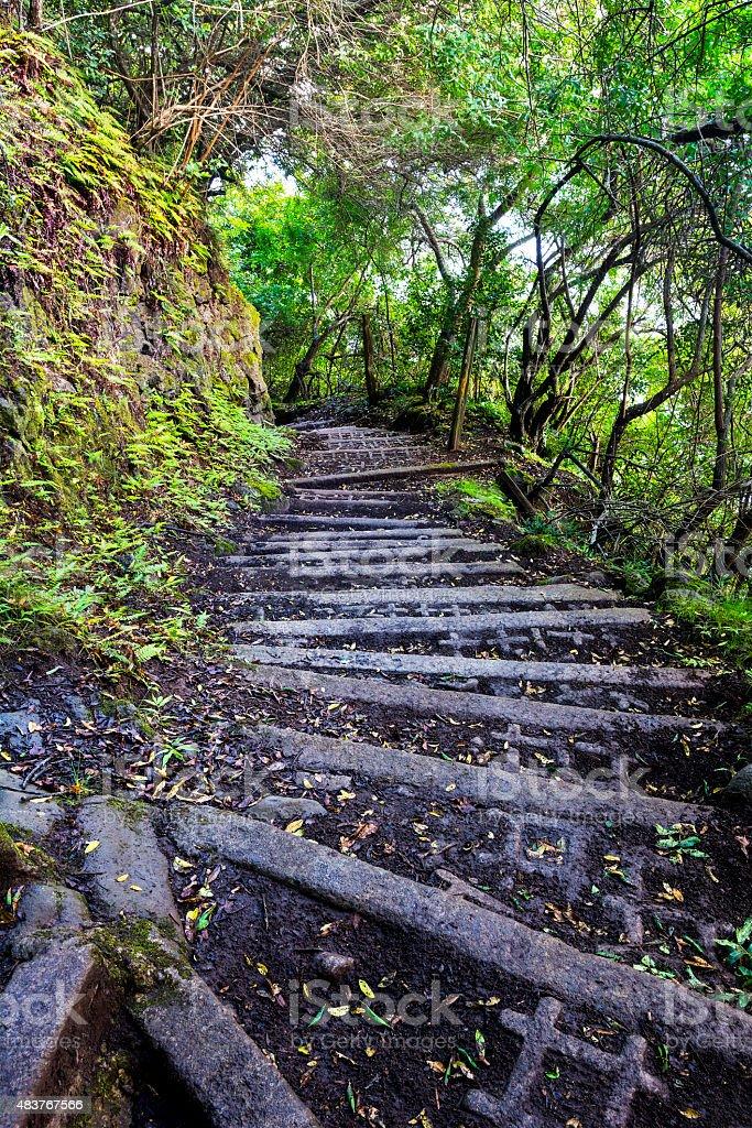 Hiking trail on Molokai Hawaii stock photo