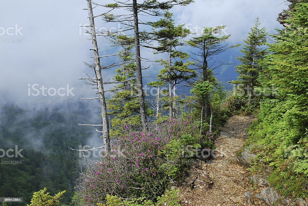 hiking trail on Mount LeConte in Great Smoky Mountains royalty-free stock photo