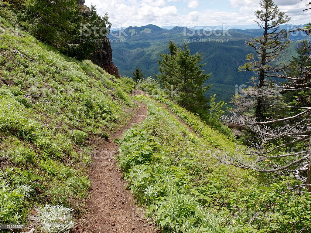 Hiking Trail on Western Oregon Mountain Side Turning Downhill Forest royalty-free stock photo