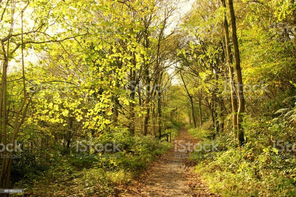 Hiking trail.   – Foto