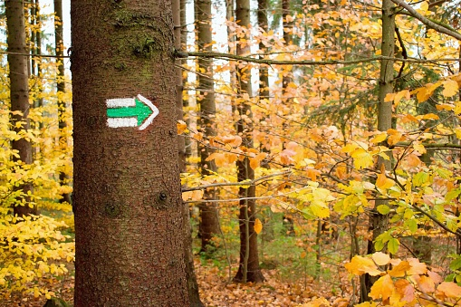 Hiking trail sign, green arrow on the tree trunk in the forest