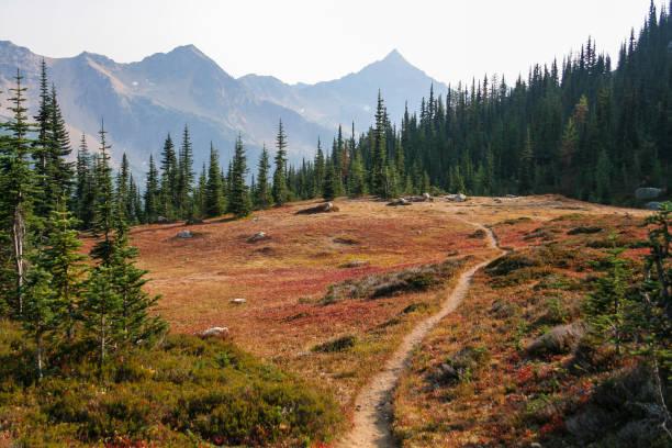wanderweg durch eine wiese - pacific crest trail stock-fotos und bilder