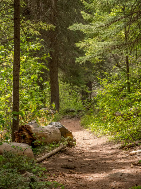 Hiking trail through forest in Washington state stock photo