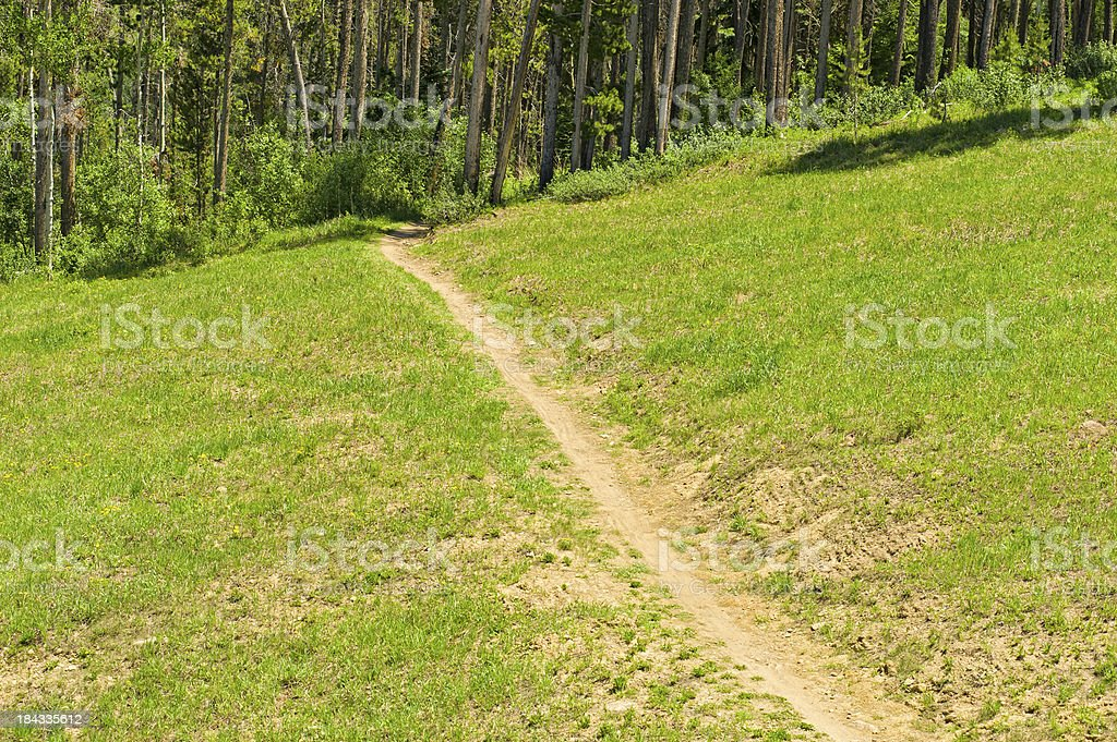 Hiking Trail Through Mountain Meadow and Forest stock photo