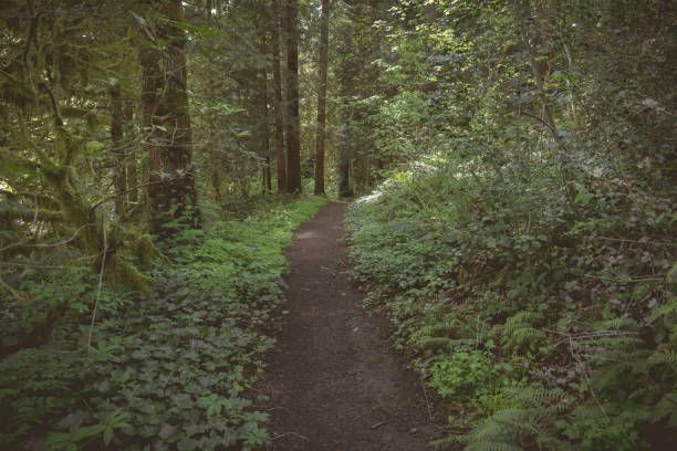 Hiking trail through Pacific Northwest forest scene stock photo
