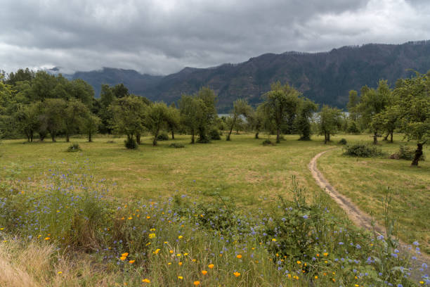 Hiking trail through summer meadow in the Columbia River Gorge stock photo