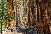Hiking trail through the forests of Yosemite National Park, California