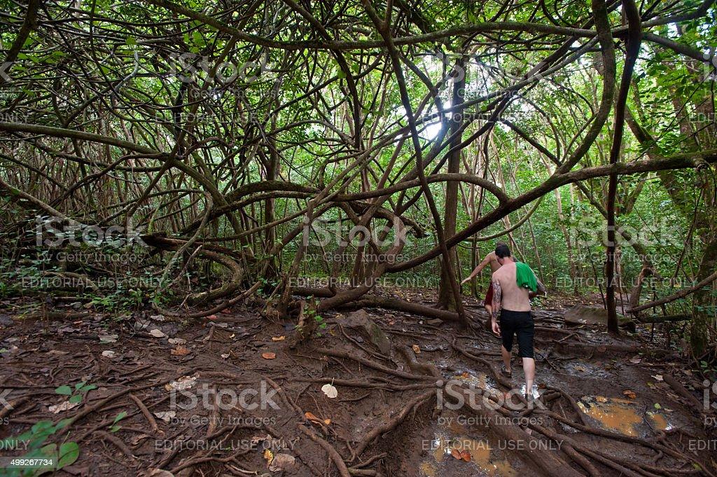 Hiking trail through the jungle to Maunawili Falls stock photo