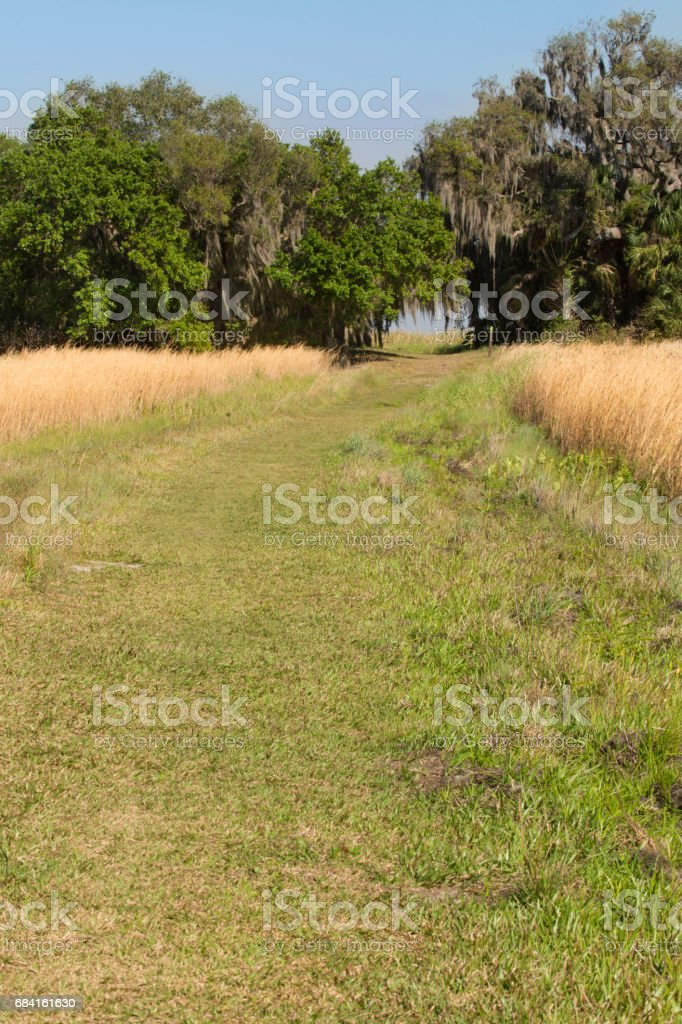 Hiking trail winding through Florida scrub at Lake Kissimmee Park. royalty-free stock photo