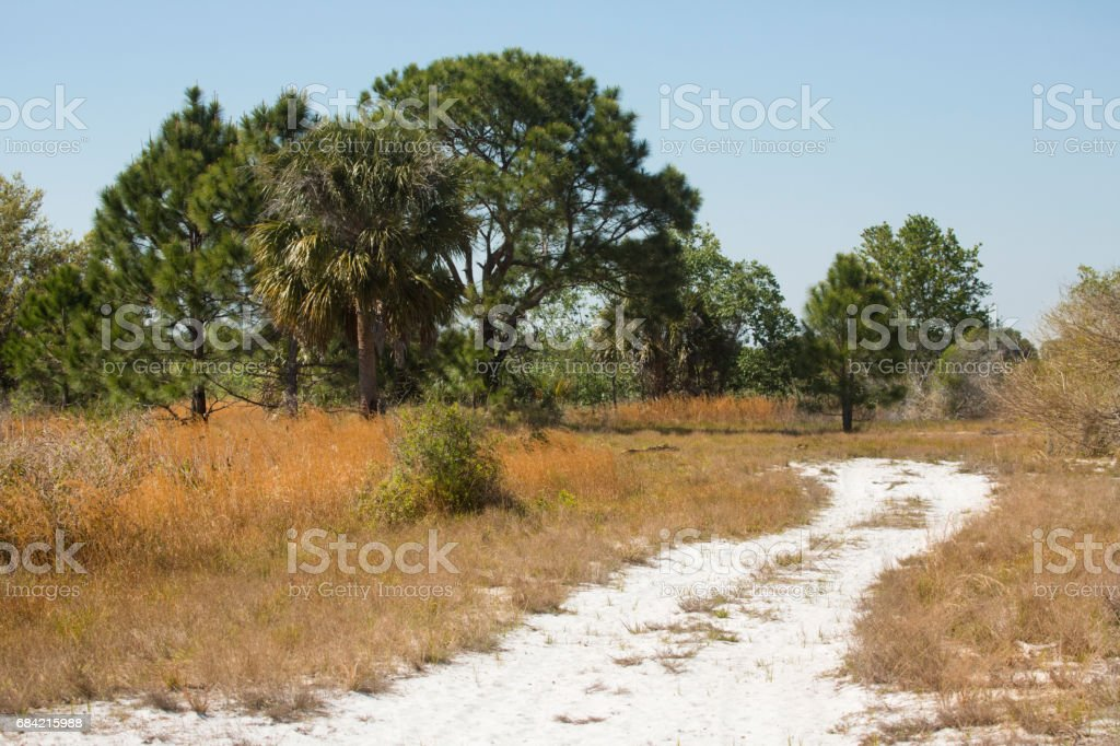 Hiking trail winding through Florida scrub at Lake Kissimmee Park. royalty-free stock photo