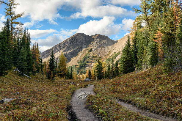 Hiking trail with rocky mountains in autumn forest at provincial park stock photo