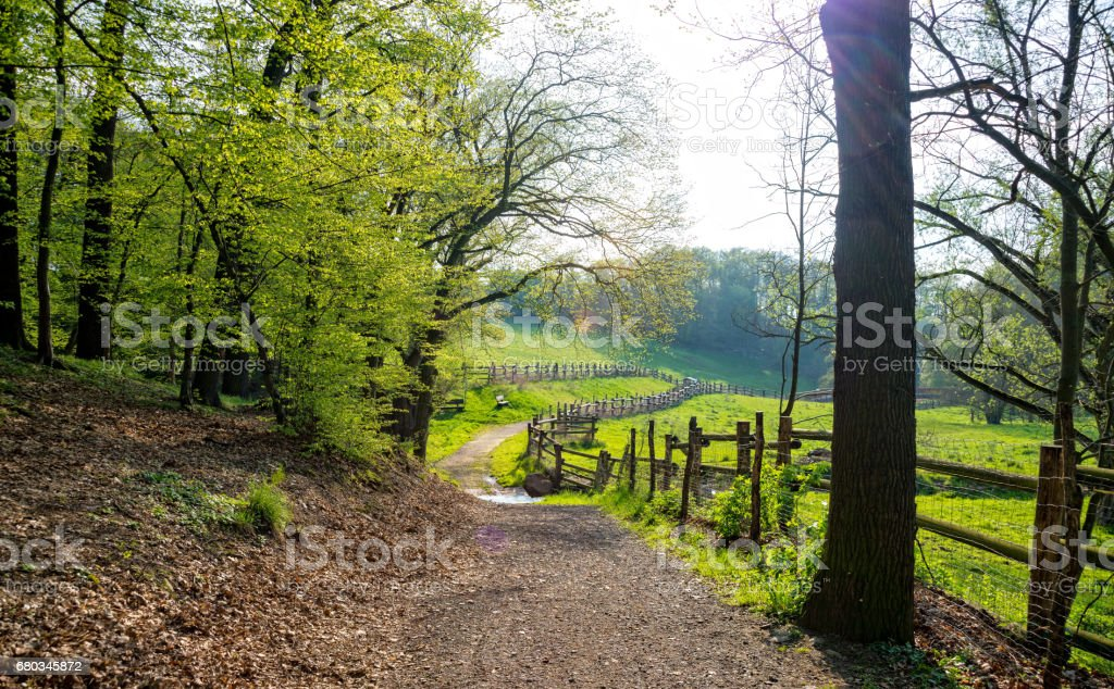 Hiking trail with sunshine through the forest royalty-free stock photo