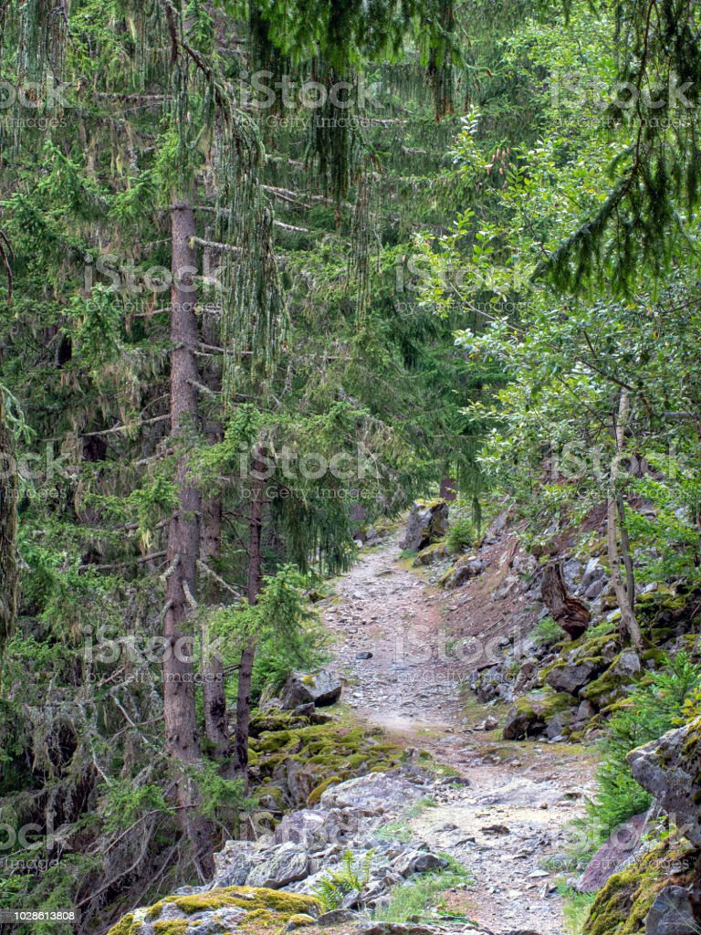 Hiking, trekking train path near Chamonix Mont Blanc, Haute Savoie, France in summer. View along the the petit balcon sud - the small south trail. stock photo