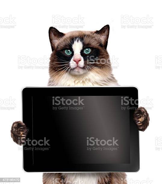 Hilarious cat holding a black screened tablet picture id473185470?b=1&k=6&m=473185470&s=612x612&h=3bdimt10ijn4uxacf nkvgnuhxpkkv45zyu0y54igca=
