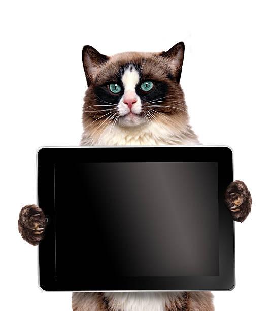 Hilarious cat holding a black screened tablet picture id473185470?b=1&k=6&m=473185470&s=612x612&w=0&h=h7dzlmfwt4bq5xjdlngixnxiuwemcc99nhjcjoetvv0=