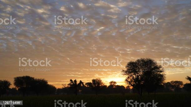 Photo of Hilarious view of golden cloudy nature on green trees. Dormant nature and appearing of darkness.