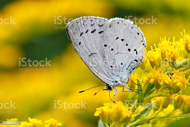 Photo of hill hedge blue